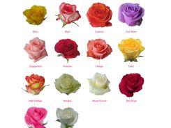 fillco-flowers-3